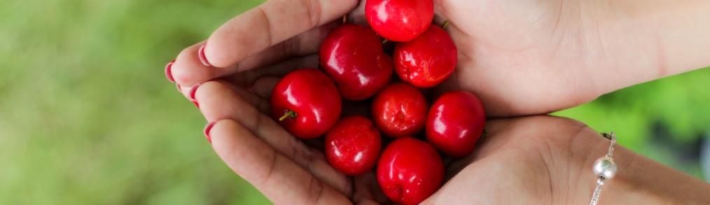 seasonal foods washington virginia maryland